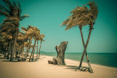Two coconut palm tree cross on the tropical beach at daytime. Royalty Free Stock Images