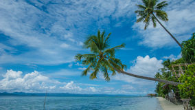 Two Coconut Palms near Diving Station on Kri Island, Raja Ampat, Indonesia, West Papua.  Royalty Free Stock Photos
