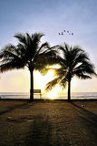 Two coconut tree Royalty Free Stock Photo