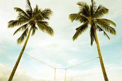 Two coconut trees bind Royalty Free Stock Photography