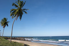 Two coconut trees and blue sea Stock Images