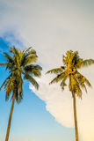 Two Coconut Trees and Blue Sky Royalty Free Stock Image