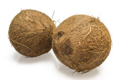 Two coconut Stock Photo