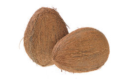 Two Coconuts. On white background Royalty Free Stock Photography