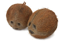 Two coconuts. Isolated on white background Royalty Free Stock Images