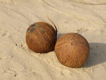 Two coconuts. Royalty Free Stock Photo