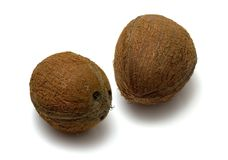 Two coconuts. Against white background royalty free stock images