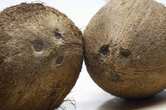 Two Coconuts Stock Photo