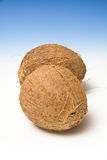 Two coconuts Royalty Free Stock Photography