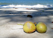 Two coconuts on the beach under the sylvan shadow of trees. At Koh Chang, Thailand Royalty Free Stock Photos