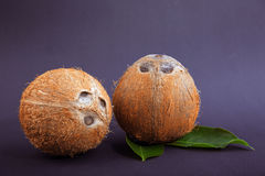 Two coconuts on a dark purple background. Ripe and hard coconuts with green leaves. Organic ingredients for homemade desserts. Stock Image