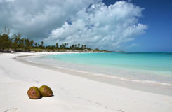 Two coconuts on a desert beach. Of Exuma, Bahamas Stock Image