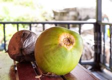 Two coconuts green brown on a wooden table on a blurred background of a sunny perspective view. From the veranda Stock Photography