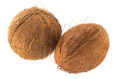 Two coconuts Royalty Free Stock Image