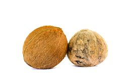 Two coconuts isolated. On white background Royalty Free Stock Photos