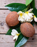 Two coconuts on leaves  and plumeria flowers Royalty Free Stock Photos