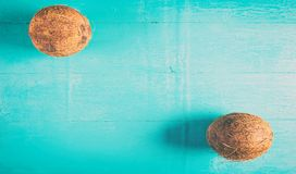 Two coconuts with shell on a blue background. Two coconuts with shell on a blue colored background Stock Image