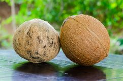 Two coconuts Royalty Free Stock Photo
