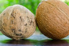 Two coconuts Royalty Free Stock Photos