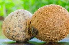Two coconuts. On the table Stock Photo