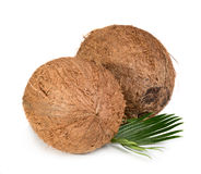 Two coconuts. Two whole coconuts with green leaf isolated on white background Royalty Free Stock Image