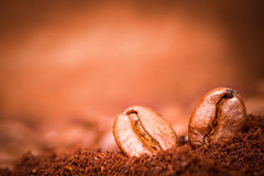 Two coffee beans at roasted coffee heap. Closeup of two coffee beans macro at roasted coffee heap Royalty Free Stock Images