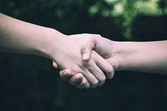 Two colleague shaking hand royalty free stock image