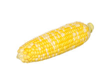 Two color corn isolated on white Royalty Free Stock Photos