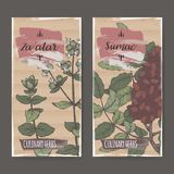 Two color labels with Zaatar aka Syrian oregano and Sumac sketch. Culinary herbs collection. Great for cooking, medical, gardening design Royalty Free Stock Photography