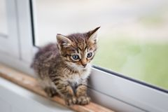 Colorful kitten walking on windowsill. Two-color little cute kitten walking alone on windowsill royalty free stock photography