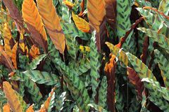 Two color nature leaf Stock Photos