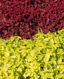 Two color plants Royalty Free Stock Photo