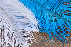 Two color quills Stock Photo