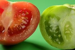 Two color tomatoes, green and red variety Stock Photography