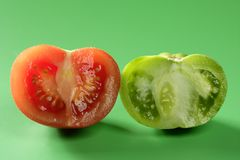 Two color tomatoes, green and red variety Royalty Free Stock Image