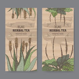 Two color vintage labels for aloe and plantain herbal tea. Set of two color vintage labels for aloe and plantain herbal tea. Placed on cardboard texture Royalty Free Stock Images