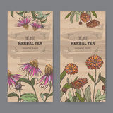 Two color vintage labels for calendula and echinacea herbal tea. Stock Photo