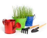 Garden tools. Two colored buckets with grass and one red water can on a white background. There are rake and shovel in the foreground. Buckets and can made of Stock Images