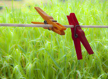 Two colored clothespins on green grass Royalty Free Stock Photography