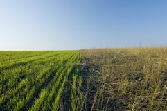 Two-colored field Royalty Free Stock Photography