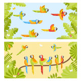 Two colorful background with flying parrots and sitting on branc Royalty Free Stock Images