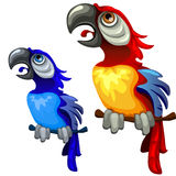 Two colorful blue and red tropical parrots Royalty Free Stock Images