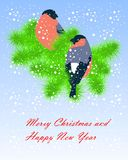 Two colorful bullfinches sitting on green fir branches, white snow on blue, Happy New Year and Merry Christmas. Stock vector illustration Royalty Free Stock Images