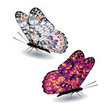 Two colorful butterflies. Stock Photography