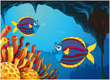 Two colorful fishes inside the cave under the sea Royalty Free Stock Images