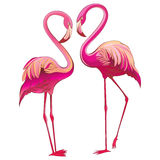 Two colorful flamingos looking at each other and building a heart-shape. Two pink flamingo looking at each other, on white illustration. Romantic couple Royalty Free Illustration