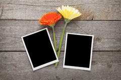 Two colorful gerbera flowers and photo frames Royalty Free Stock Images