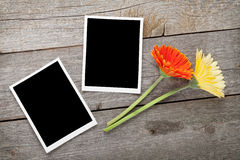 Two colorful gerbera flowers and photo frames Royalty Free Stock Photography