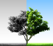Two colorful halves of the tree. Vector Royalty Free Stock Photos