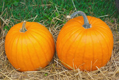 Two colorful orange pumpkins for halloween or thanksgiving outside on straw Stock Photography